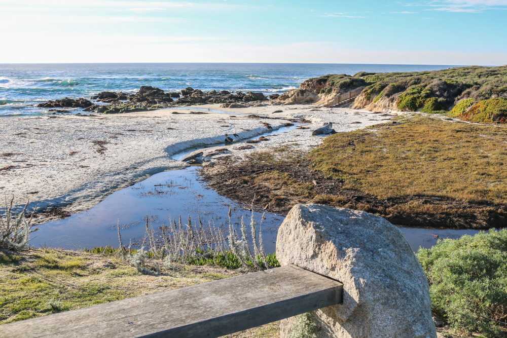 This Beautiful Beach Is Crawling With Marine Life From Sea Lions And Harbor Seals Playing In The Surf To Anemones Crabs Hanging Out Tide Pools