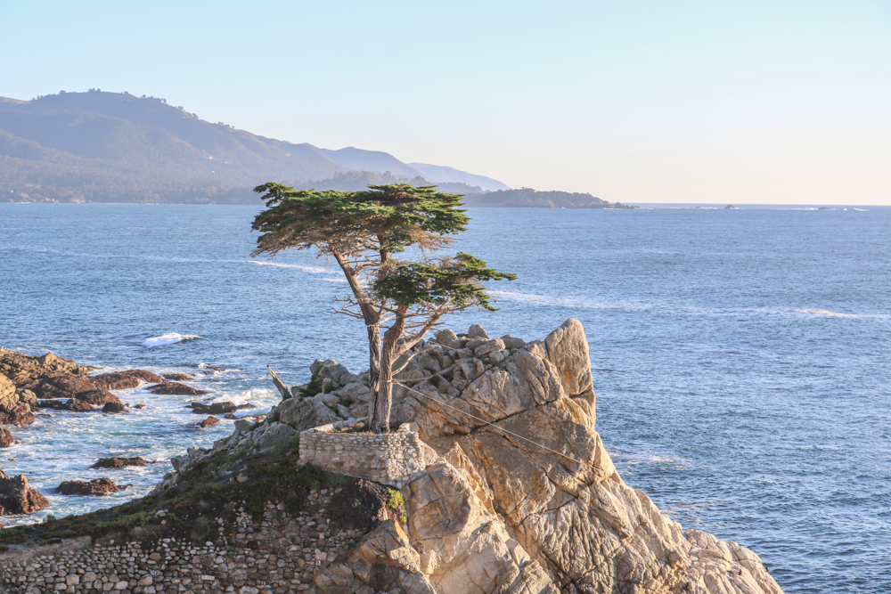 17md_blog_12-2-16_km-097-lone-cypress