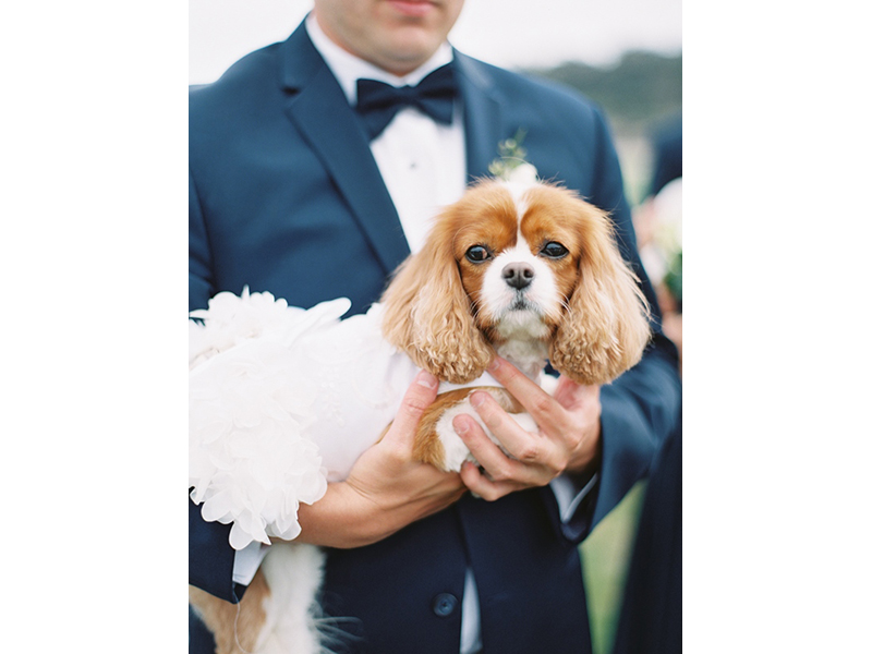 Man in tuxedo holding dog in dress