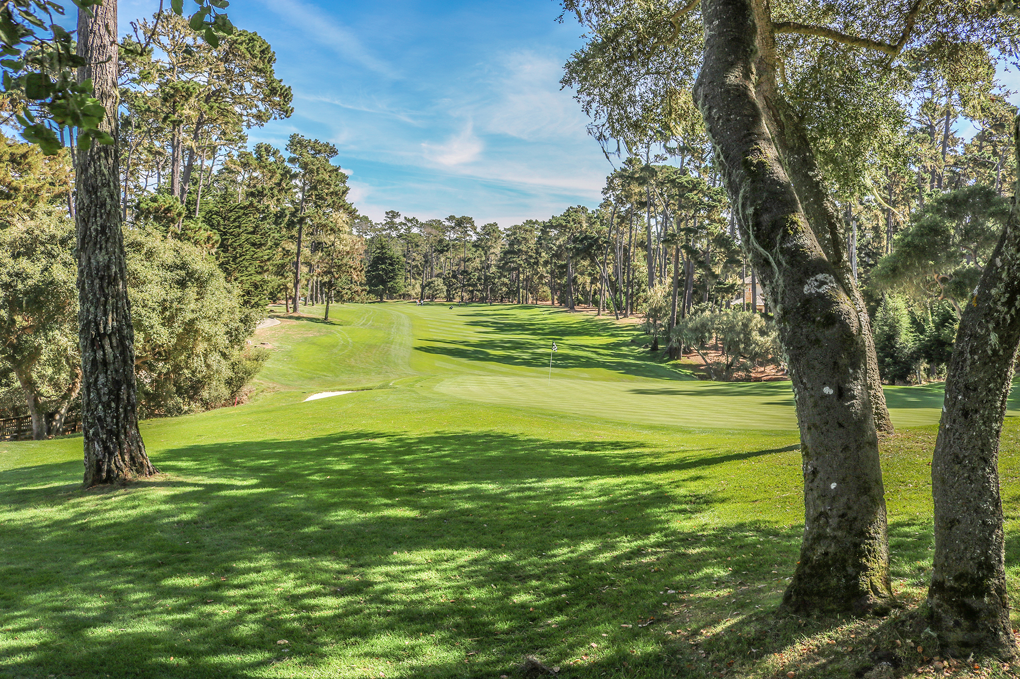 View from behind the 16th green at spyglass hill with tree trunks in foreground