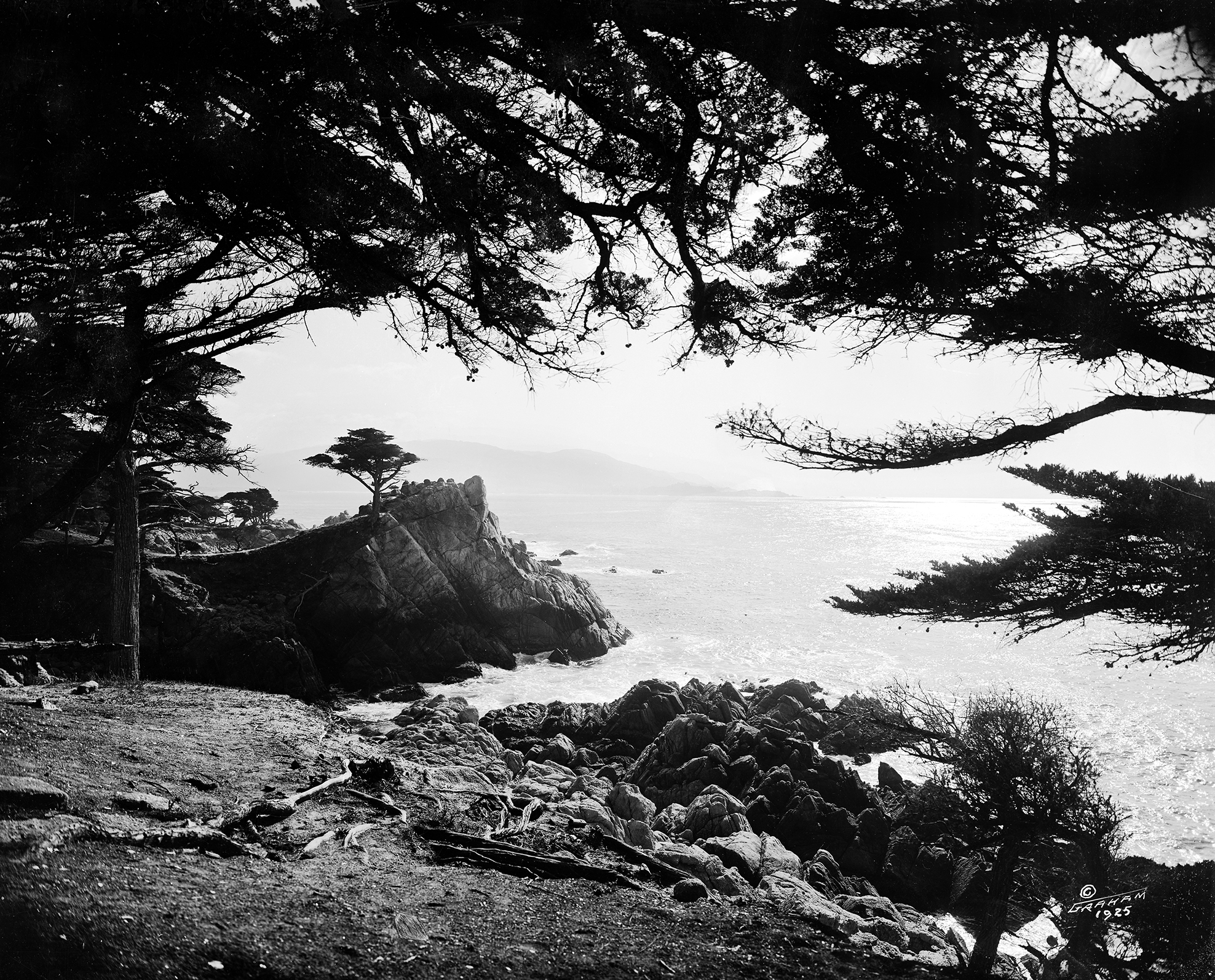 The Lone Cypress in 1925