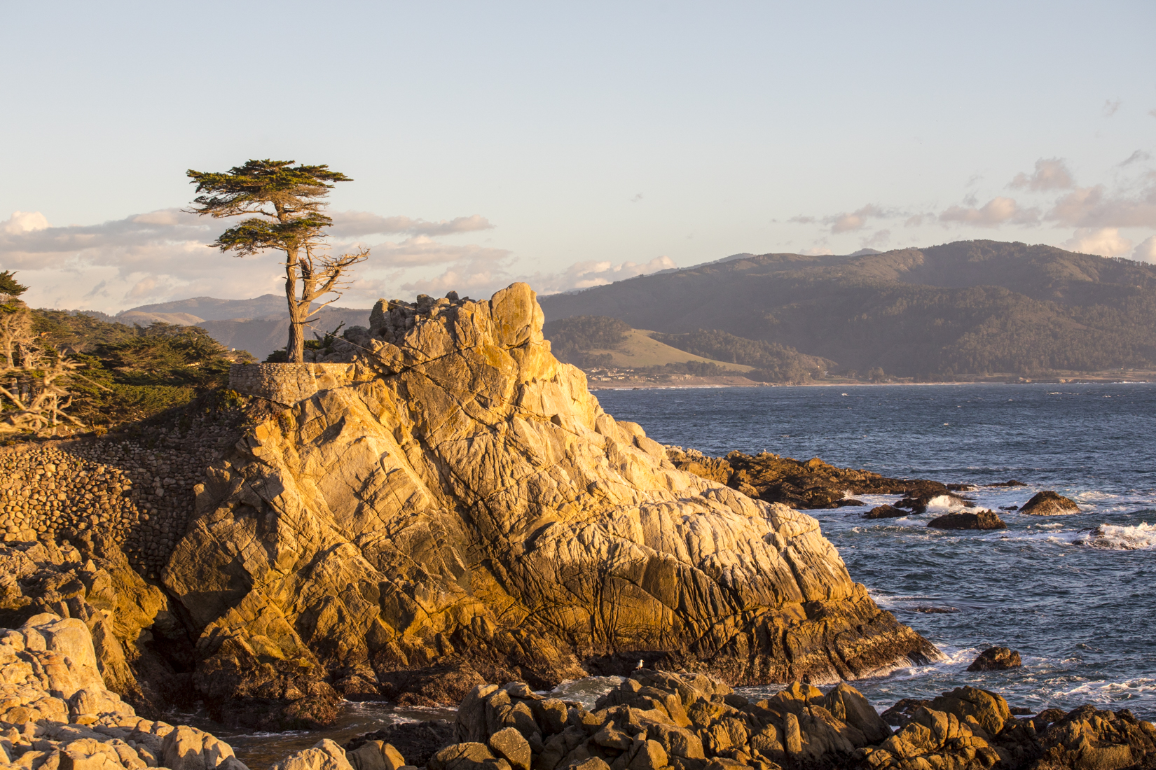 The Lone Cypress, February 2019