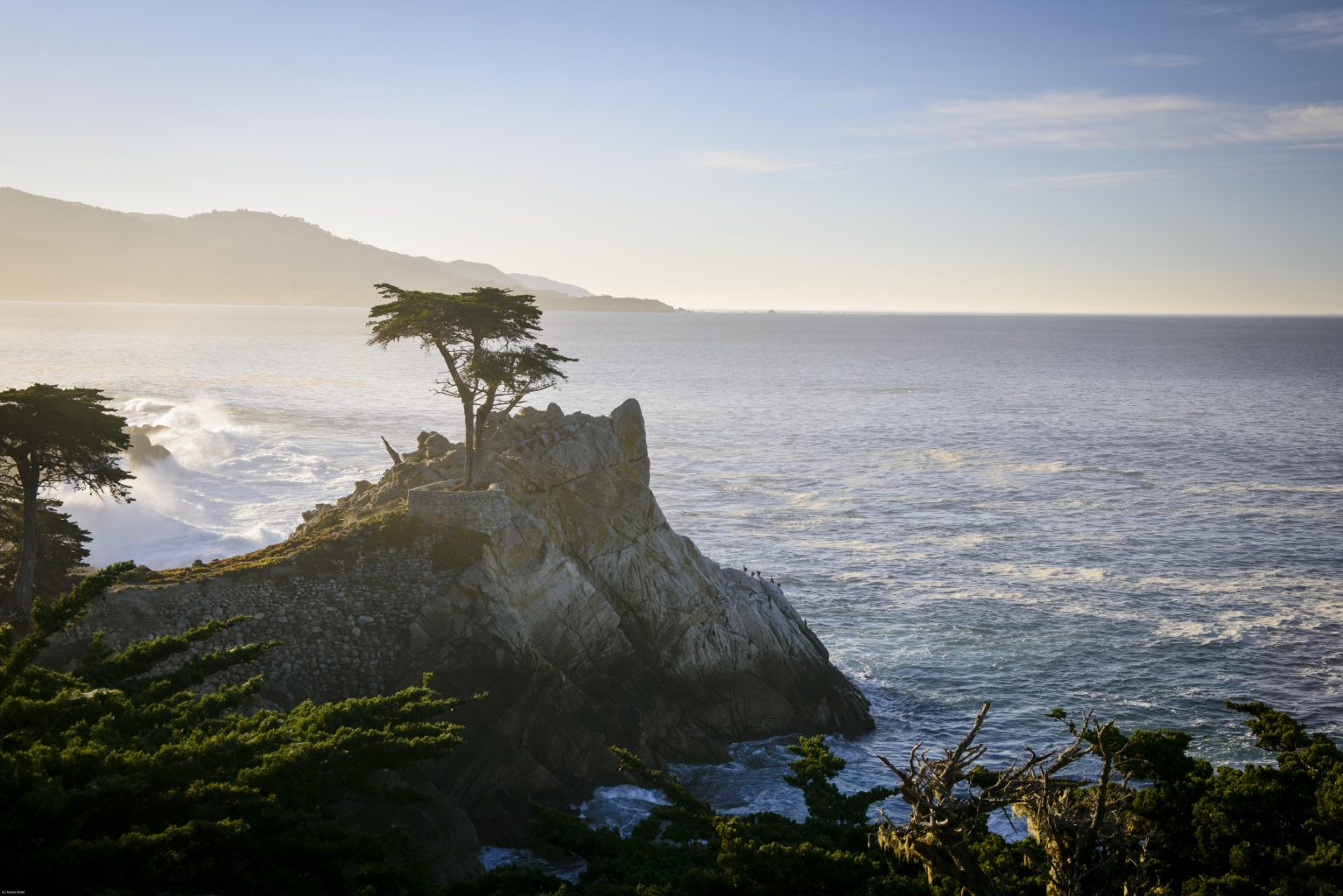 The Lone Cypress Stands Alone