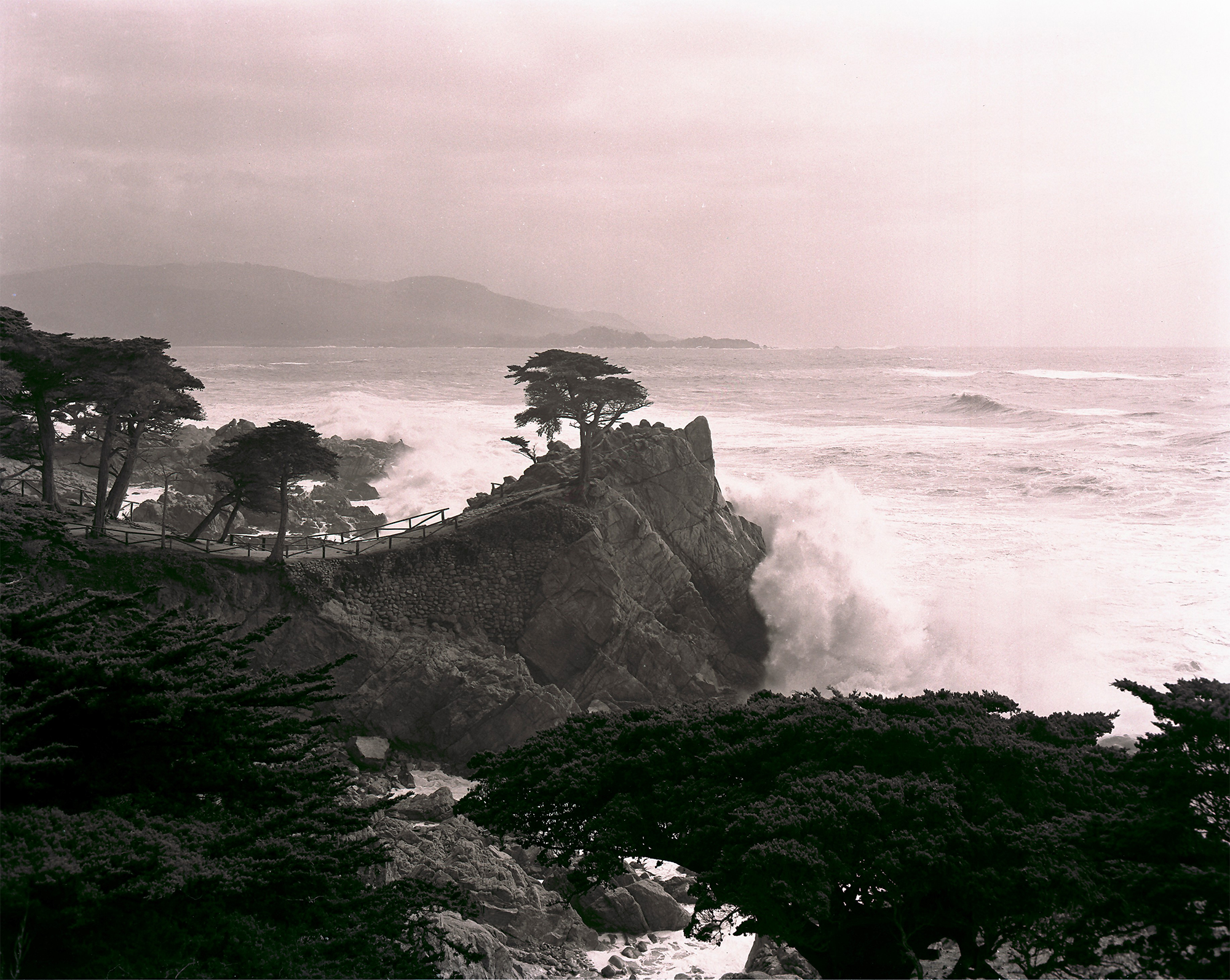 Lone Cypress Wave