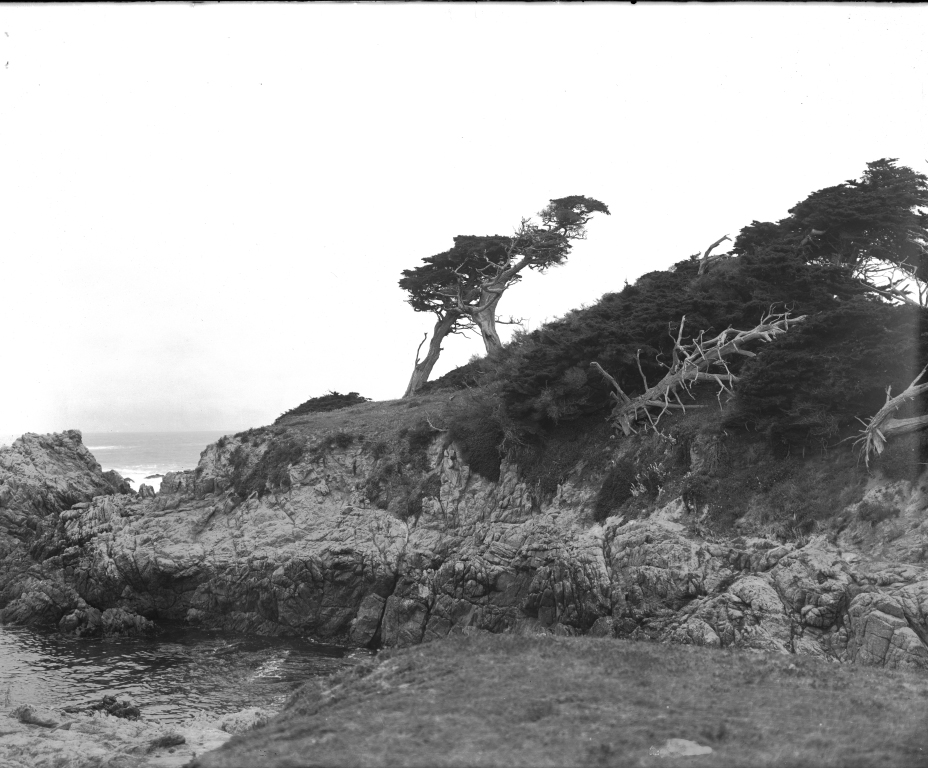 OSTRICH TREE