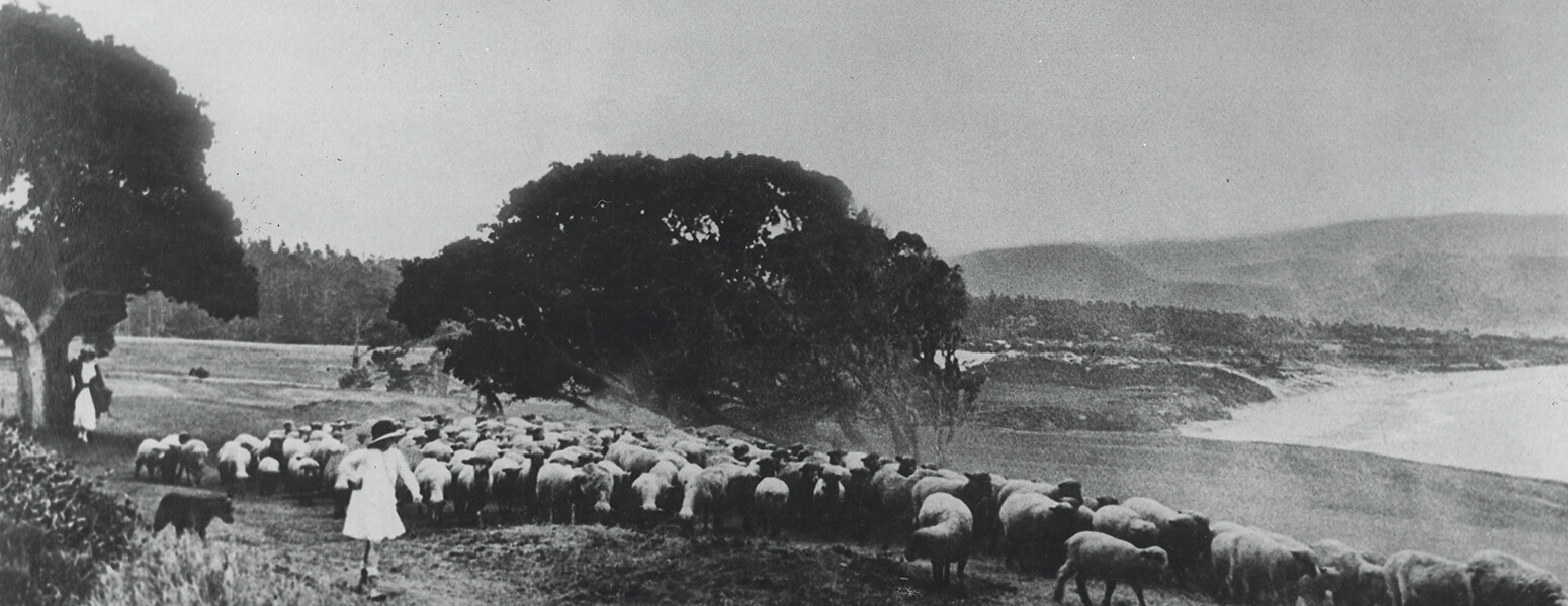Black And White Photo Of Pebble Beach Showing Small Sheep
