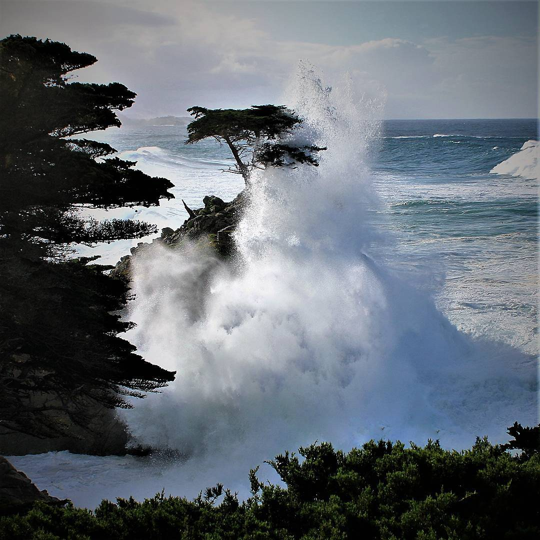Big wave hitting the Lone Cypress